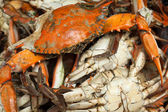 Cooked blue crabs — Stock Photo