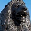 Stock Photo: Trafalgar Square Lion
