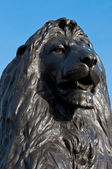 Trafalgar Square Lion — Stock Photo