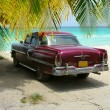 Cuba Beach classic car and palms — Stock Photo