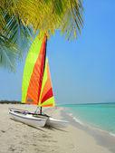 Colorful catamaran and palm tree on beach — Stock Photo
