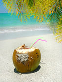Caribbean beach coconut and palm — Stock Photo