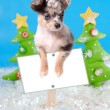 Dog on Christmas sign — Foto Stock