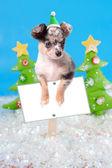 Dog on Christmas sign — Stock Photo