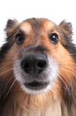 Close up on dog's face — Stock Photo
