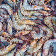 Raw shrimps — Stock Photo