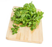 Three fresh mint leaves isolated on white background. Studio mac — Stock Photo