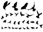 Pigeons — Stock vektor