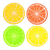 Citric slices — Stock Vector