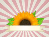 Summer banner — Stock Vector