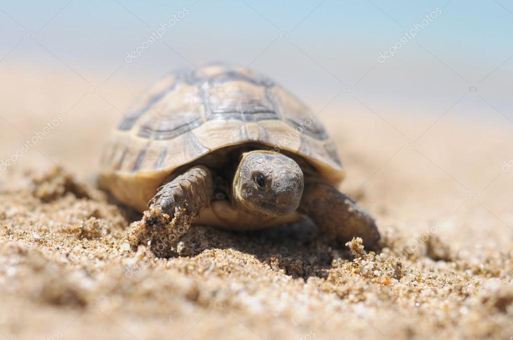 土耳其阿拉尼亚海滩动物