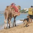 Animals,beach turkey - Lizenzfreies Foto