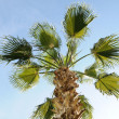 Stock Photo: Asia, palm,