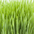 Novruz grass — Stock Photo