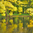 Foto Stock: Golden willows