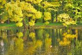 Gyllene willows — Stockfoto