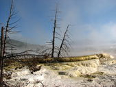 Geyser, Yellowstone National Park in the state of Wyoming — Stock Photo