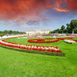Vienna, Austria - Schoenbrunn Gardens flowers shapes, a UNESCO W - Stock Photo