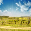 Stock Photo: Fields and Meadows of Tuscany in Spring