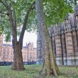 The Westminster Abbey church in London, UK - Side view — Stock Photo #13786179
