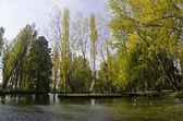 Vegetation of Fonti del Clitunno Park in Umbria — Stock Photo