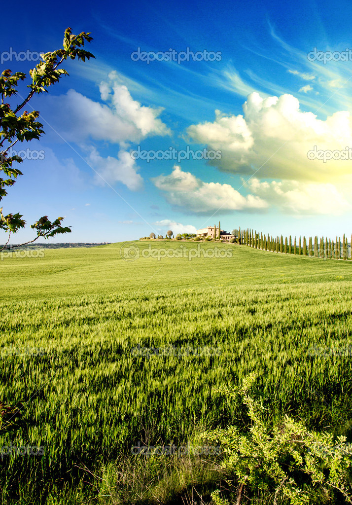 Meadows of Tuscany in Spring Season, Italy  Stock Photo #15736427