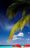 Palmer och karibiska färger — Stockfoto