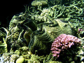 Underwater Scene of Great Barrier Reef — Stock Photo