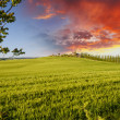 Landscape and Meadows of Tuscany, Spring Season — 图库照片