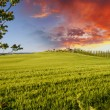 Landscape and Meadows of Tuscany, Spring Season — Stock Photo