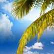 Beatiful Caribbebeach with Palms and Red Umbrella — Stock Photo #19208919