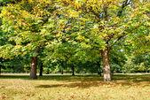 St James Park and Vegetation - London — Stock Photo