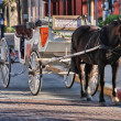 NEW ORLEANS - MAR 26: Mule-Drawn Carriage in the city streets, M — Stock Photo