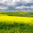 Scenic view of typical Tuscany spring time landscape — Stock Photo
