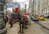 NEW YORK - MAR 4: Horse and carriage at Central Park, March 4, 2 — Stock Photo