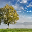 Beautiful view of isolated tree on dramatic background sky - Стоковая фотография