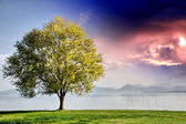 Beautiful view of isolated tree on dramatic background sky — Stock Photo