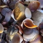 Shells on a sandy beach, Thailand — Stock Photo #23085178