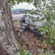 Terrible accident - Car against a tree — Stock Photo