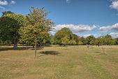 Wonderful sky over Hyde Park with beautiful vegetation - London — Stock Photo