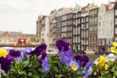 Colourful Flowers and Amsterdam typical Buildings, Netherlands — Stock Photo