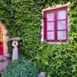 Beautiful red window on a wall covered with ivy — Stock Photo