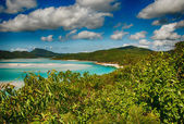 Wonderful sea and forest of Queensland. Whitehaven Beach - Austr — Stock Photo