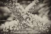 Detail of a Frozen Tree on Italian Alps — Stock Photo