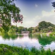 Beautiful panoramic view of Central Park in summer season, NYC — Stock Photo