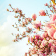 Magnolia tree blossom with colourful sky on background — Stock Photo