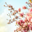 Magnolia tree blossom with colourful sky on background — Stock Photo #29007009