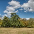 Wonderful sky over Hyde Park with beautiful vegetation - London — Stock Photo
