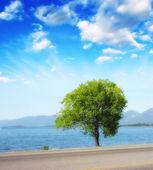 Alone tree near water — Stock Photo