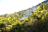 Cairns-Port Douglas Coast, Australia — Stock Photo